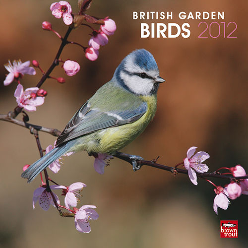 Birds Wall Calendars and Planners  2020-2021
