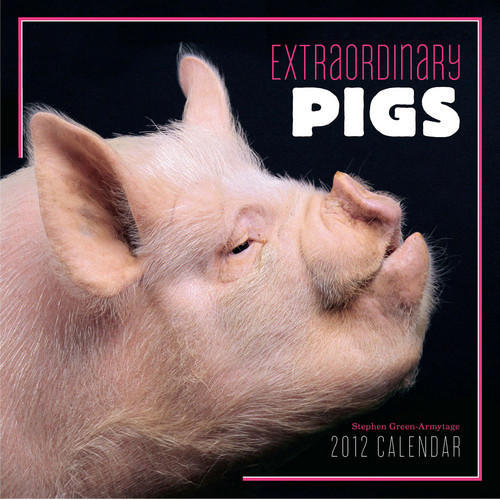 Funny Pigs and Cute Piglets Wall Calendars 2017